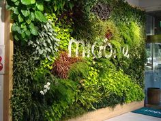 """Suntory Midorie has created these indoor walls for offices, malls, cafes, airport lounges, and hair salons in Tokyo and Osaka. The systems use artificial planting material (half the weight of soil), hydroponic systems automated with pumps and timers, with water collecting at the base. The water drips from top to bottom once a week, and Suntory Midorie provides monthly maintenance to its corporate clients."""
