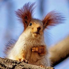 you thought you had a problem with ear hair............