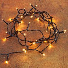 Pflanzen-Kölle Kölle LED Ricelight 40 Lichter, Classic Warm, 3 m, schwarzes Kabel  Vielseitig einsetzbare LED Ricelight-Lichterkette mit 40 goldgelb leuchtenden Lichtern und schwarzem Kabel - für Lichterglanz Innen und Außen.