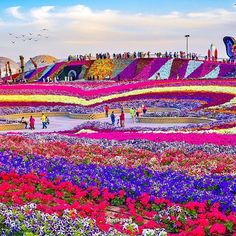 """""""Dubai Miracle Garden - U.A.E ✨❤️✨ Picture by ✨✨@JhimGreg✨✨"""" Photo taken by @wonderful_places on Instagram, pinned via the InstaPin iOS App! http://www.instapinapp.com (04/10/2015)"""