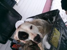 Dear God, please repay 10 times the pain to whoever did this! AMEN   Rescue agency caring for dog found in the trash