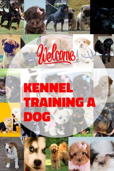 Kennel training is useful with youthful dogs and also older puppies with stress and anxiety issues. The greatest goal regarding crate exercising is trying to keep your dog away from harms approach. Kennel Training A Dog, Crate Training, Dog Training Tips, Stress And Anxiety, Have Fun, Image Link, Challenges, Puppies, Pets