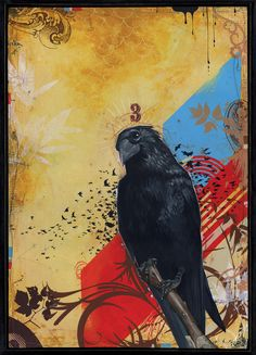 'Grandfather Raven,' acrylic on board by Brian Fontana Crow Bird, Quoth The Raven, Dark Wings, Raven Art, Crows Ravens, Art Sketchbook, Bird Art, Pet Birds, New Art