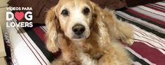 Adaptação da casa para cães idosos