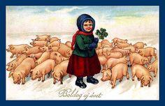 Hungarian swineherd 1934