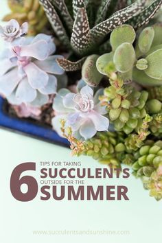 The basics of succulent care. Succulents are easy to take care of and fun to experiment with too! Buy a few and you'll be hooked on succulents forever! How To Water Succulents, Growing Succulents, Water Plants, Outdoor Plants, Cacti And Succulents, Planting Succulents, Planting Flowers, Plants Indoor, Succulent Landscaping