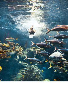 Rihanna, entre tiburones para Harper's Bazaar