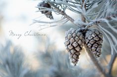 (via Merry Christmas | Flickr : partage de photos !)