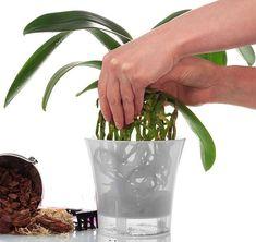 G-Mail :: Szia, Gabor! Ne szalaszd el a következő pineket. Horticulture, Planter Pots, Home And Garden, Plants, Gardening, Asd, Garden Ideas, Decor, Tips