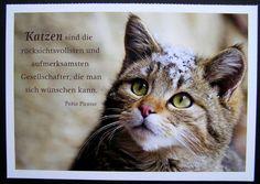 Katzen Sprüche | Bnbnews.co