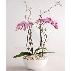 Arreglo de orquídeas phalaenopsis