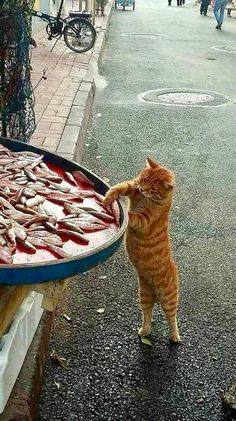 """ another sardine! Just one, for #vendredichatsroux!"""