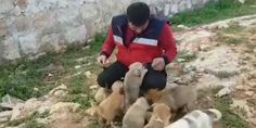 Mohammad Alaa Jaleel — aka the Cat Man of Aleppo — is known for creating cat sanctuaries in Syria, and now he's taking in a family of 16 dogs.