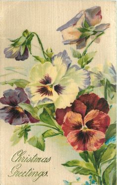 six pansies, three open, bottom right pansy is red