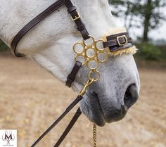 Bay Horse, Horse Fly, Horse Tack, Horse Riding, Beautiful Horse Pictures, Beautiful Horses, Equestrian Gifts, Equestrian Fashion, Gypsy Cafe