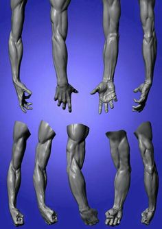 Book Figure Sculpting Volume I: Planes & Construction Techniques in Clay by Philippe Faraut Zbrush Anatomy, Arm Anatomy, Anatomy Poses, Muscle Anatomy, Body Anatomy, Anatomy Study, Anatomy Drawing, Anatomy Art, Human Anatomy