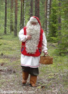Santa Claus picking reindeer lichens for his reindeer in a forest in Rovaniemi in Lapland