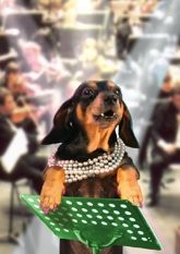"""Musical dachshund thank you card, featuring the singing dachshund, Lucy Lou. Inside message: """"You're like music to my soul. Musical Cards, Black And Tan Dachshund, Weiner Dogs, Thank You Cards, Doggies, Musicals, Singing, Greeting Cards, Hilarious"""