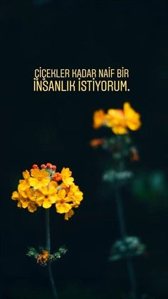 Flower Wallpaper, Happy Campers, Karma, Sentences, Islam, Lyrics, Thoughts, Anime, Movie Posters