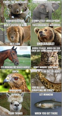 Animal Puns by zmescience #Humor #Puns #Animals @Naomi Francois Francois Francois Birch