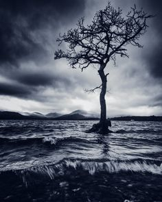 Milarrochy Tree, Loch Lomond... by David Mould on 500px