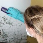 If you do see mildew growing in your home, brush the object to remove surface mildew and vacuum to remove loose mold. Sponge or wash remaining mildew with detergent and dry thoroughly. Diy Cleaning Products, Cleaning Hacks, Fee Du Logis, Mold Prevention, Get Rid Of Mold, Mold And Mildew, Remove Mold Stains, Home Hacks, Clean House