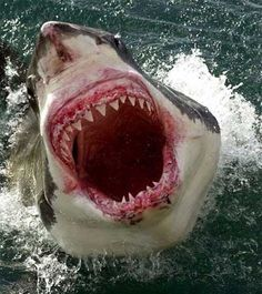 Johni why don't you get in the ocean? Because I'm not Top of the Food Chain I'm part of the Chum Line!!!       aka SHARKS!