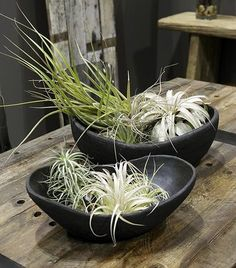 Tillandsia can grow without soil and with little water (though they like humidity and do not like direct sun). You can keep them alive by either misting them or soaking them once a week.