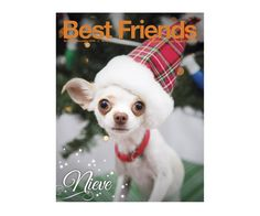 It was a close race, but the winner is . . . Nieve! A big thank you to the 10,000+ folks who voted in our second annual magazine cover contest!   When you become a Best Friends member by making a donation $25 or more to the animals, you'll receive Best Friends magazine for a year. Sign up by October 1 to start receiving the magazine in time for our holiday issue!
