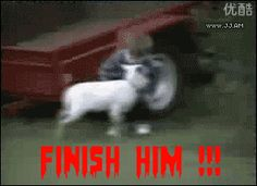 Gif-king is a king of fun sharing website. Find here the latest funny/baby/animal/people/gif images, photos and pictures. Funny Videos, Funny Animal Videos, Zoo Animals, Funny Animals, Cute Animals, Funny Fails, Funny Memes, Hilarious, Funny Photos