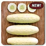 Organic Silver Slicer Cucumber - A creamy white slicing cucumber with excellent flavor and lovely smooth skin! Thirty-five seedsters can't be wrong: Silver Slicer cut through the competition to take not the silver but the gold in our 2013 cucumber taste test. Hands down winner due to its mild flavor, juicy texture and thin skin.