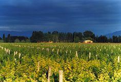 Conoce los #vinos de la bodega Finca La #Anita (Agrelo - #Mendoza) en nuestra Web!
