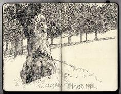 """Ian Sidaway Fine Line, """"Old Oaks, Levens Park"""""""