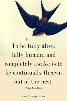 To be fully alive, fully human, and completely awake is to be continually thrown out of the nest. Pema Chödrön #wakeup #awaken #birdnest