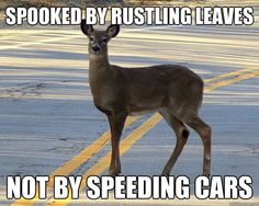 SOOO TRUE!!! I'm not sure where you are but we get a million (ok not a million) but close, car/deer accidents at night.