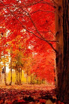 Autumn path, Japan