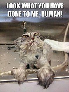 Pet Bath-time Pictures (22 Pics)