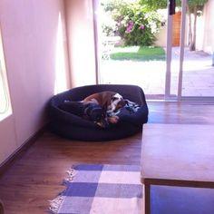 doggies having afternoon nap