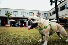 Do you ❤️ being outdoors with your furry, 4-legged friend🐶? Check out our list of the 1️⃣8️⃣ Most Popular Dog Parks in NJ - recommended by locals❗️