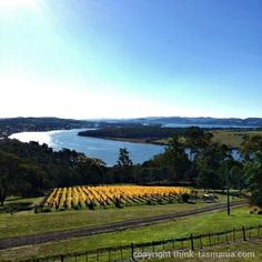 Brady's Lookout - Tamar Valley ~ article and photo for think-tasmania.com ~ #Tasmania #Lookout #Launceston #TamarValley