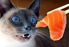 Advantages and drawbacks of feeding your cat raw foods.