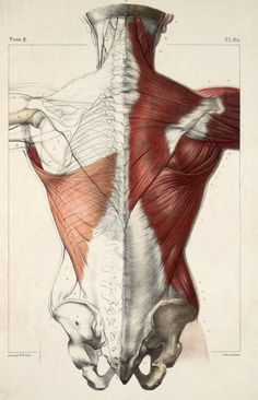 Tome 2. Pl. 84. Traité complet de l'Anatomie de l'Homme.Vols. I- VIII, (Second edition, Paris, 1867–1871 https://pinterest.com/pin/287386019941966857/). Author: BOURGERY, Jean-Baptiste (1797-1849 https://pinterest.com/pin/287386019948321810). Artist: Nicolas Henri Jacob (1782-1871).
