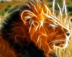 High Resolution Cool 3D Animal Background Wallpaper HD 2 Full Size ...