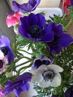 Virágaim...
