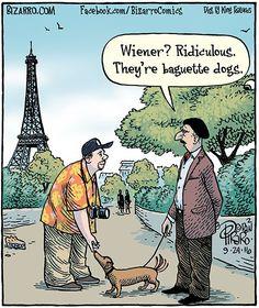 Dachshund – Friendly and Curious Dapple Dachshund, Dachshund Art, Dachshund Puppies, Weenie Dogs, Daschund, Funny Dachshund, Doggies, I Love Dogs, Puppy Love