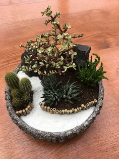 My home made mini garden How can you design a mini garden? This question appe… Mon mini jardin fait maison … Mini Cactus Garden, Fairy Garden Pots, Indoor Fairy Gardens, Dish Garden, Succulent Gardening, Succulent Terrarium, Miniature Fairy Gardens, Cacti And Succulents, Planting Succulents