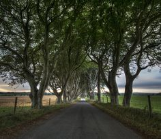 https://flic.kr/p/oU8qze | Dark Hedges - Northern Ireland | The Dark Hedges, Armoy, Ballymoney, County Antrim, Northern Ireland   beautiful avenue of beech trees was planted by the Stuart family in the eighteenth century.  It was intended as a compelling landscape feature to impress visitors as they approached the entrance to their home, Gracehill House.  Two centuries later, the trees remain a magnificent sight and have become known as the Dark Hedges  Hope you enjoy! Please Favourite…