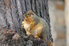 北米、英国で暖冬のせいか肥満リスが大量発生wwwwwwww