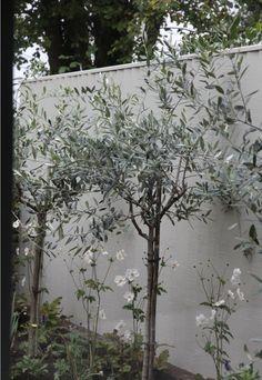 Sarah's garden fence painted in Farrow & Ball Bone, Hendy Curzon Gardens