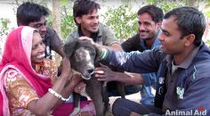 Kalu, the Dog Who Was Found Without a Face, Makes an Incredible Recovery